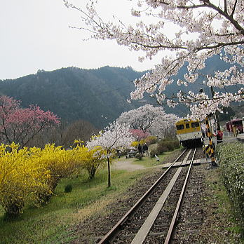 yasuno02.jpg