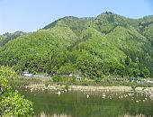 sinryoku01.jpg